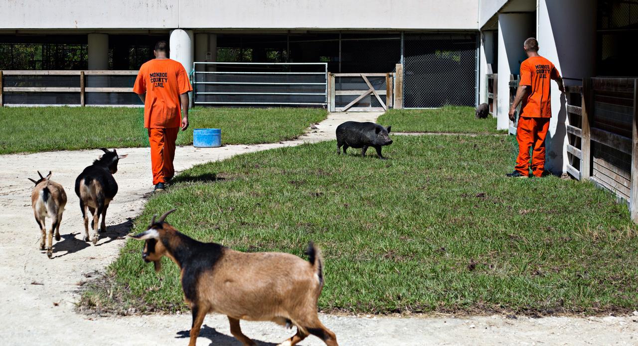 监狱里的动物园
