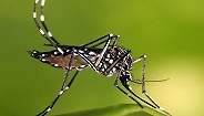 Zika病毒或致婴儿畸形 美国划定22个全球旅行禁区