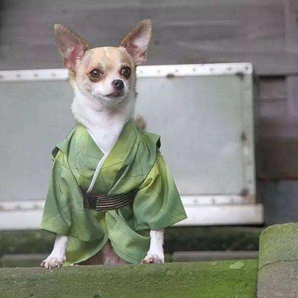 动物的时尚你不懂