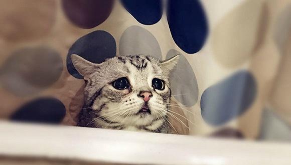 壁纸 动漫 动物 卡通 漫画 猫 猫咪 头像 小猫 桌面 580_330