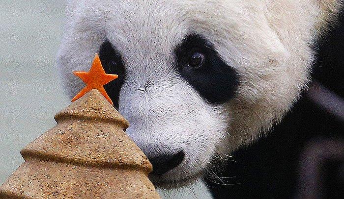 日本熊猫香香日本评论图片