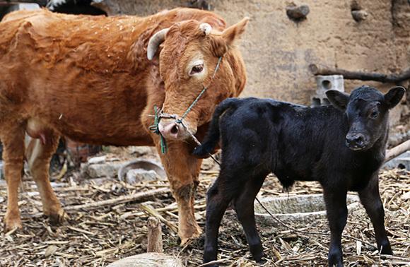 最牛的公司_保险公司最牛的医疗险 几大保险公司哪个最牛