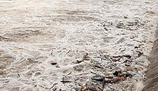 【深度】洪澤湖魚蟹死亡背后:淮河流域污染危機何解?
