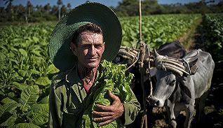 跟随古巴烟草工,走近雪茄背后的生产链