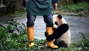 卖萌熊猫、矮寨暮色......来十二艺节看摄影师镜头下的?#35272;?#20013;国