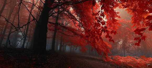锁屏壁纸秋天 风景