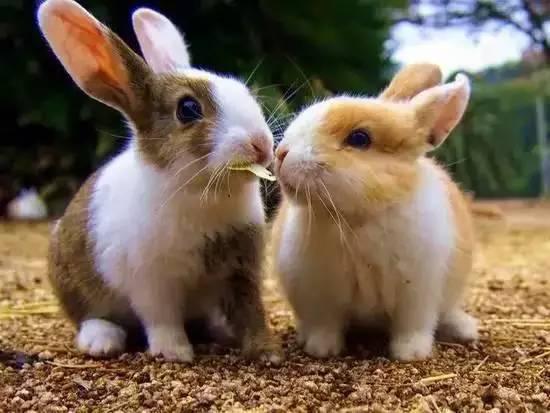 兔子被围攻-在日本称霸萌界的动物旅行地 ,不去的话 你可能会后悔图片