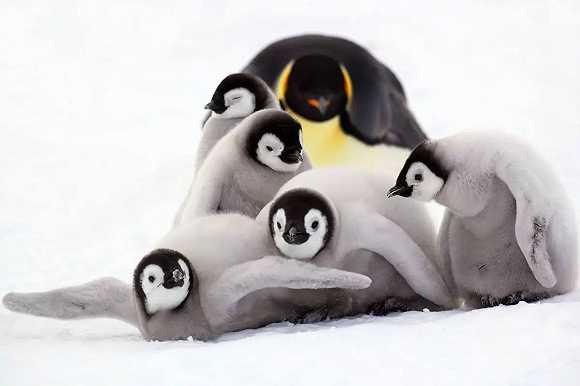 壁纸 动漫 动物 海报 卡通 漫画 企鹅 头像 580_386