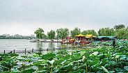 免費后的濟南大明湖景區近年來游客連續倍增