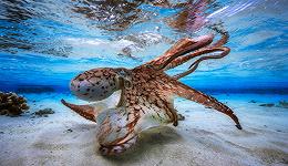 他们拍的海底世界,太美了!