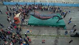 【视频】一头抹香鲸的75小时迷途