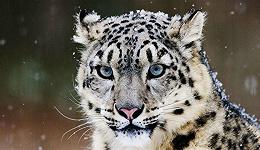 长江源地区大量珍贵野生动物活动视频首次披露