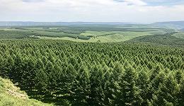 """绿色塞罕坝""""成长记"""":从一棵树到一片""""海"""""""