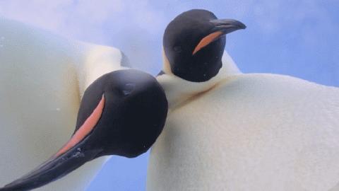 帝企鹅的自拍