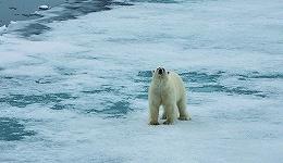 企鹅这么可爱 北极熊怎么会不吃企鹅呢?