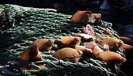 受捕鱼业影响的海域面积到底有多大 专家们吵起来了