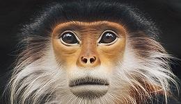 消失在越南森林里的野生动物