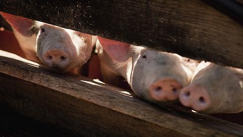 直通部委| 今年前两月环境行政处罚为11.92亿元 农业农村部:下半年肉价涨幅或超70%