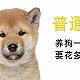 普通人养狗一年要花多少钱?
