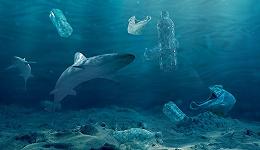 数据 | 【为海洋发声】每年180亿磅塑料被扔进大海,31年后海洋中的塑料可能比鱼多?