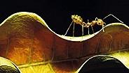 人蚁之间:两个群体是如何走向或抵抗混乱的?