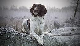 动物亦有记忆,或将帮助人类解密阿兹海默症