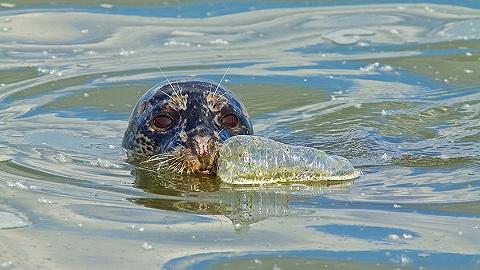 【天下奇闻】环保组织从太平洋捞起40吨塑料垃圾 伊万卡G20刷存在感被吐槽
