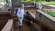农业农村部:非洲猪瘟疫情发生势头明显减缓,防控取得阶段性成效
