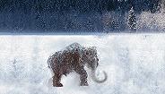"""挖猛犸象牙没人管,气候变暖催生俄远东""""淘金热""""引生态担忧"""