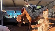 """种地养牛之外,看美澳农民如何变身""""网红""""造福自己和社会"""