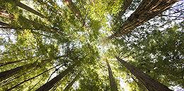 天然林保护修复制度方案发布:建立天然林资源损害责任终身追究制