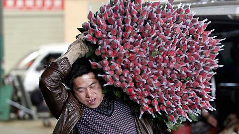 【特写】一支七夕玫瑰?#36864;?#20010;男人:云南斗南的鲜花生意如何运转?