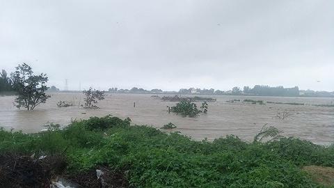 寿光1.8万个蔬菜大棚进水,菜农:如果雨势继续增大将影响种植计划