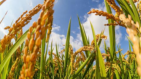 全球升温可能引发粮食危机,专家建议加强农业灾害预警