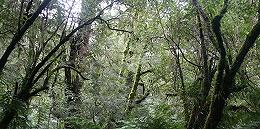 """非洲中部雨林的火也不小,地球这""""第二个肺""""却为何没获足够关注?"""