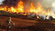 全球最大湿地频遭林火光顾,巴西多地进入紧急状态