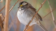 《寂静的春天》一语成谶?近半个世纪,北美鸟类数量少了30亿只