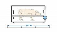数据 | -18℃里最多存储4个月的储备猪肉对价格影响大么?