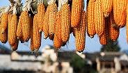 《中国的粮食安全》白皮书发布,两重要指标均超过6.5亿吨