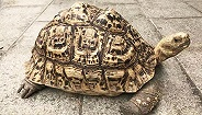 非法收购、出售珍稀陆龟,8名嫌疑人被上海警方抓获
