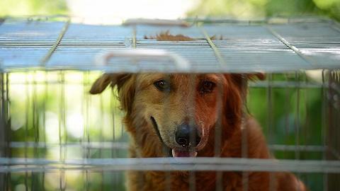 超14天无人领养流浪犬将被安乐死? 专家:流浪犬问题更应从源头治理
