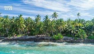 海南椰子产业系列报道