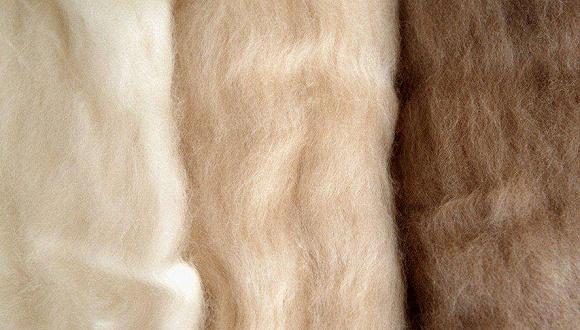 央视调查羊绒主产地:价格降了30%!天冷了,保暖品为啥凉了?图1