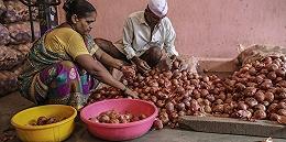 印度洋葱价格持续飙升:国民蔬菜惹恼邻国恐再酿政治危机?