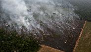 亚马孙去森林化达十年来最快水平,巴西或在气候大会上承压