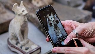 埃及展出新发现的动物木乃伊,看起来有点儿萌