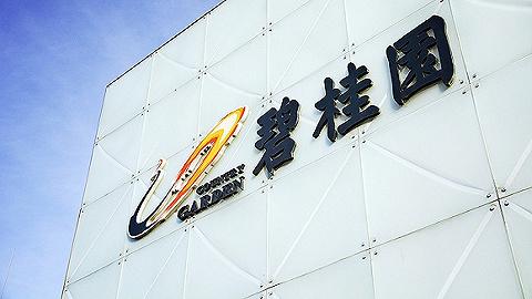 销售额超去年,碧桂园在新业务上又有了变化