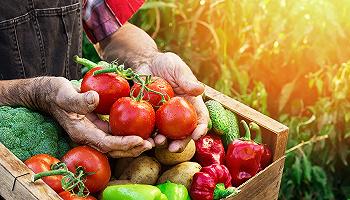 """淘寶上線""""吃貨助農"""",讓你從農田直接買到疫期滯銷的紅心獼猴桃"""