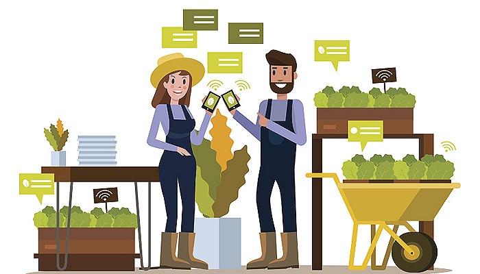 现如今,你选择哪家生鲜平台买菜?