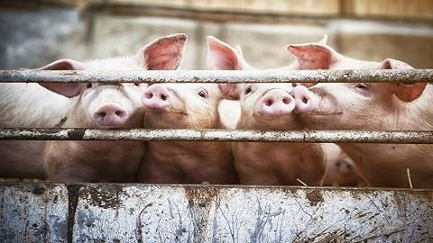 新冠疫情压低上市猪企出栏,2月生猪产业发展指数继续反弹逼近历史高位